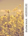 wildflowers. | Shutterstock . vector #632033132