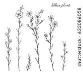 flax plant  wild field flower... | Shutterstock .eps vector #632086058