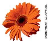 Orange Gerbera Blossom Flower...