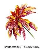 dahlia. watercolor hand drawn... | Shutterstock . vector #632097302