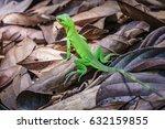 close up of green lizard over... | Shutterstock . vector #632159855