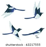 Magpies Collection   Vector