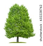 an isolated lime tree on a... | Shutterstock . vector #632228762