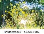 native prairie restoration area ... | Shutterstock . vector #632316182