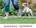 mischievous cocker spaniel... | Shutterstock . vector #632340242