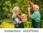 old couple is picking apples.... | Shutterstock . vector #632370362