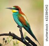 bee eater  | Shutterstock . vector #632384342