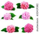 hydrangea hortensia flowers...   Shutterstock . vector #632419382