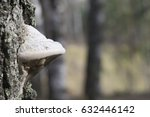 White And Brown Polypore With...