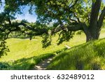 large oak tree providing shade  ... | Shutterstock . vector #632489012