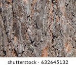 Texture Of Bark Of Pine And...
