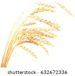 wheat isolated on white | Shutterstock . vector #632672336