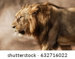 beautiful and rare asiatic lion ... | Shutterstock . vector #632716022
