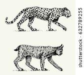 wild cats set  leopard and lynx ... | Shutterstock .eps vector #632789255