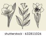 flower set  highly detailed... | Shutterstock .eps vector #632811026