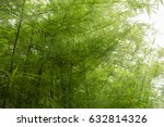 sunlight shining on the bamboo... | Shutterstock . vector #632814326