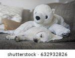 Young White Labrador Retriever...