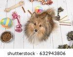 adult shetland sheepdog seen...   Shutterstock . vector #632943806