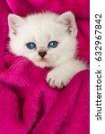 Stock photo kitten on pink blanket 632967842