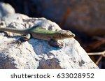 lizard closeup | Shutterstock . vector #633028952