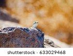 firing lizard | Shutterstock . vector #633029468