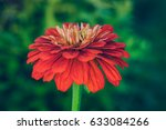 beautiful flower blossom in the ... | Shutterstock . vector #633084266