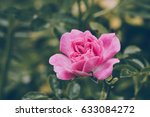 beautiful flower blossom in the ... | Shutterstock . vector #633084272