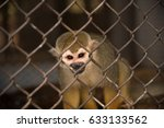 Squirrel Monkey In The Cage