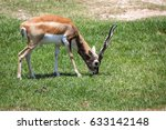 image of impala male  aepyceros ... | Shutterstock . vector #633142148