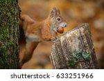 cheeky squirrel steals a nut | Shutterstock . vector #633251966