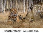 tiger  siberian tiger | Shutterstock . vector #633301556