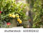 lemon plant in mediterranean...   Shutterstock . vector #633302612