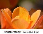 a stunning orange flower opens... | Shutterstock . vector #633361112