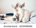 Small photo of Two adorable cats are sitting on a bed and looking at you. Cat breeds, indoor pet. Cozy home background with funny pets. Two cats is better than one