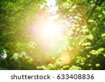 Small photo of Young green leaves in sun rays. Spring time nature background with light leaks. Selective focus