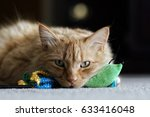 Stock photo orange cat and his toy 633416048