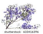 Flowering Blue Jacaranda...