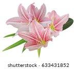 pink amaryllis flower bouquet...   Shutterstock . vector #633431852
