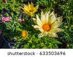 Bright Yellow Gazania Flower O...