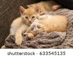 Stock photo cat little kittens 633545135