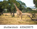a giraffe walking on the... | Shutterstock . vector #633620075