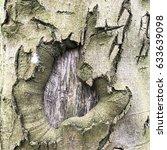 scars on old tree trunk | Shutterstock . vector #633639098