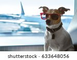 holiday vacation jack russell... | Shutterstock . vector #633648056
