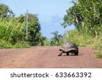 Giant Tortoise Walking On A...