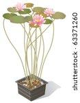 water lilies in planter... | Shutterstock .eps vector #63371260