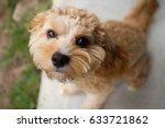 Stock photo puppy 633721862