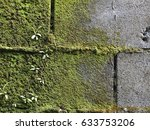 Cement Wall Green Mold