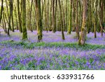 bluebell woods at camborne in... | Shutterstock . vector #633931766
