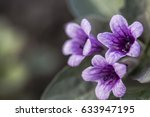 purple flowers floral background | Shutterstock . vector #633947195