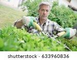 mature man in garden trimming... | Shutterstock . vector #633960836